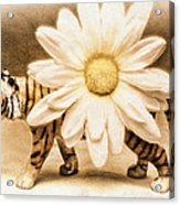 Tiger Dream Acrylic Print
