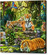 Tiger Family At The Pool Acrylic Print