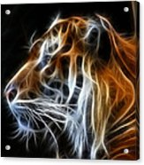 Tiger Fractal Acrylic Print by Shane Bechler