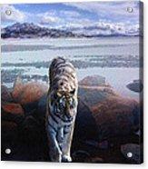 Tiger In A Lake Acrylic Print