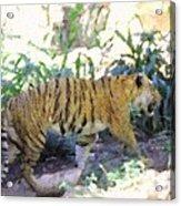 Tiger In Crayon Acrylic Print by Judy  Waller
