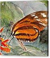 Tiger Longwing Acrylic Print