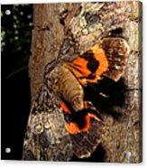 Tiger Moth Flight Acrylic Print