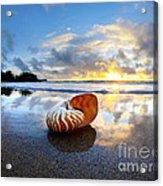 Tiger Nautilus Sunrise Acrylic Print