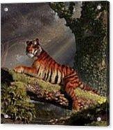 Tiger On A Log Acrylic Print by Daniel Eskridge