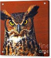 Tiger Owl Acrylic Print