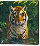 Tiger Pool Acrylic Print