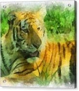Tiger Resting Photo Art 01 Acrylic Print