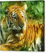 Tiger Resting Photo Art 02 Acrylic Print