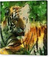 Tiger Resting Photo Art 03 Acrylic Print
