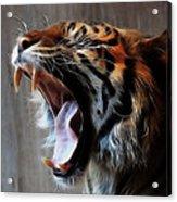 Tiger Roar Acrylic Print