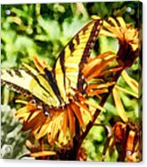 Tiger Swallowtail On Yellow Wildflower Acrylic Print