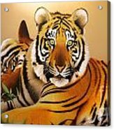 Tiger Tales Acrylic Print by Shannon Rogers