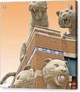 Tiger Town Acrylic Print