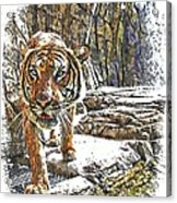 Tiger View Acrylic Print