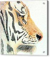 Tiger's Head Acrylic Print