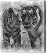 Tigers Photo Art 01 Acrylic Print