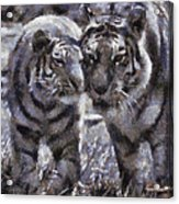 Tigers Photo Art 02 Acrylic Print