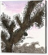 Tijuana Tree Acrylic Print