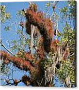 Tikal Furry Tree Closeup Acrylic Print
