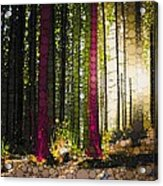Till The Wood Acrylic Print