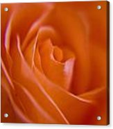 Tilted Rose Acrylic Print by Kim Lagerhem