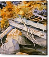 Timber Tumble Acrylic Print
