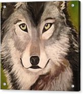 Timber Wolf In Summer Acrylic Print