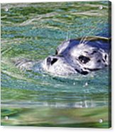 Time For A Swim Acrylic Print
