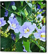 Time For Spring - Floral Art By Sharon Cummings Acrylic Print