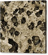 Time Holes - Sepia Tone - Wonderwood Collection - Olympic Peninsula Wa Acrylic Print