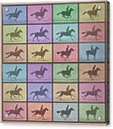 Time Lapse Motion Study Horse Color Acrylic Print