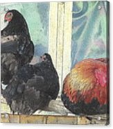 Chicks Taking A Time Out Acrylic Print