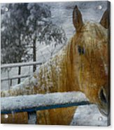 Time Stands Still Acrylic Print by Kathy Jennings