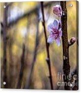 Time To Bloom Acrylic Print