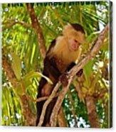 Time To Monkey Around Acrylic Print