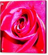 Timeless Red Rose Acrylic Print