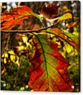 Tinged In Red Acrylic Print