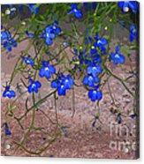 Tiny Blue Flowers Acrylic Print