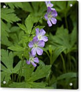 Tiny Flowers In The Forest Acrylic Print