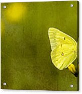 Tiny Green Dancer Acrylic Print