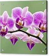 Tiny Orchid Faces Acrylic Print