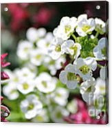 Tiny Pink And Tiny White Flowers 2 Acrylic Print