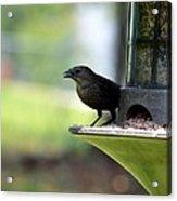 Tiny Seed For A Tiny Bird Acrylic Print