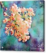 Tiny Spring Tree Blooms - Digital Color Change And Paint Acrylic Print