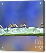 Tiny Waterworld And A Leaf Acrylic Print