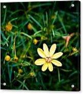 Tiny Wildflower Acrylic Print