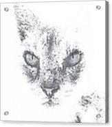 Tip Acrylic Print