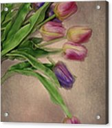 Tip Toe Thru The Tulips Acrylic Print by Mary Timman