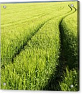 Tire Tracks In Grain Field Acrylic Print